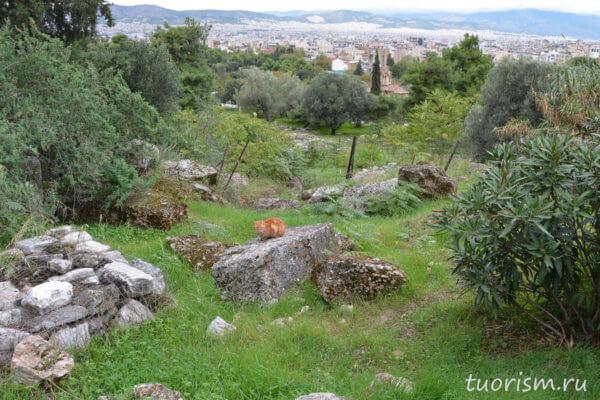 агора, котик, рыжий кот, руины, Афины, Греция