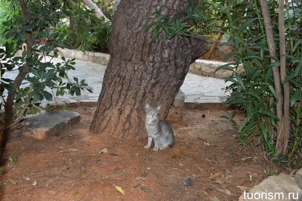 Коты в Афинах, Греция