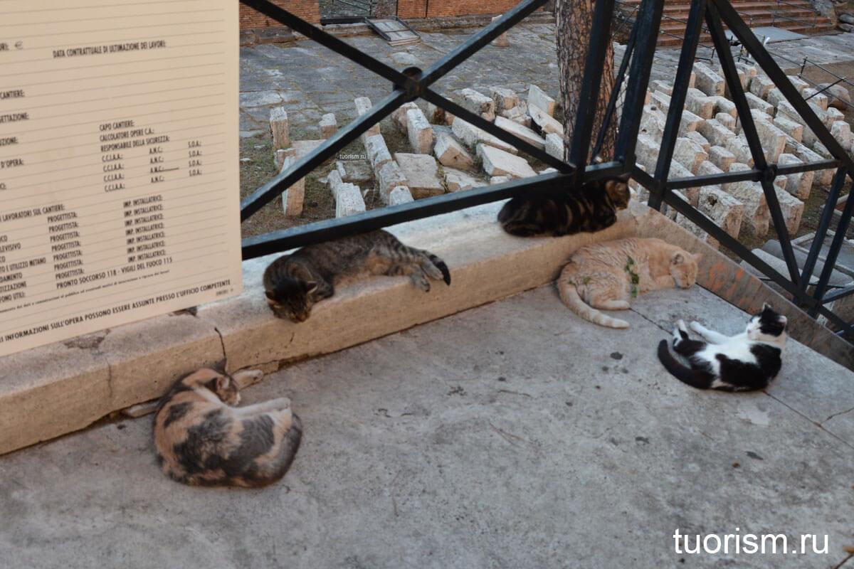 площадь кошек, Рим