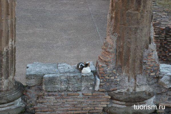 кошачья площадь, Рим, Торре Арджентина, cats, Torre Argentina