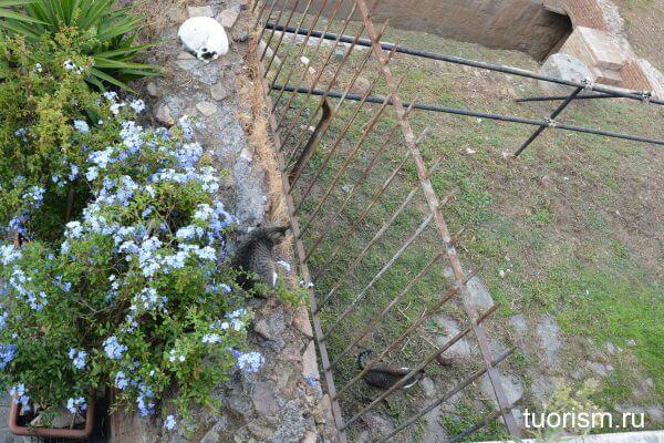 площадь кошек, площадь Торре Арджентина, кошки, Рим, torre argentina cat sanctuary