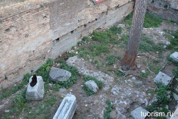 кошачья площадь, кошачье святилище, Рим, площадь кошек, Торре Арджентина