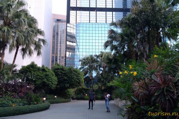 Causeway Bay, красота, Гонконг, небоскрёбы, парк, пальмы